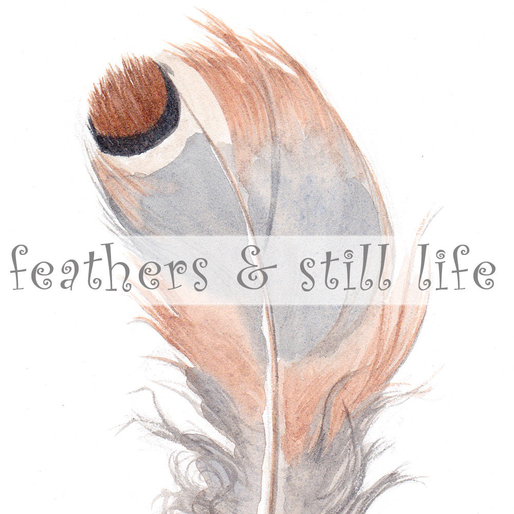 feathers and still life
