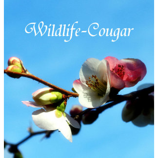 Wildlife-Cougar