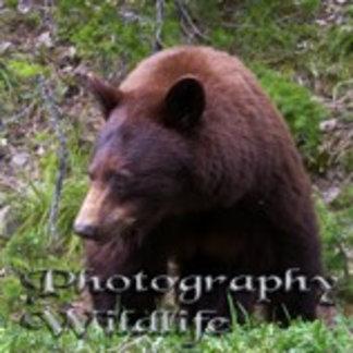 Photography - Wildlife