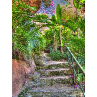 Jungle Scenes