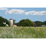 Wildflower Farm.jpg