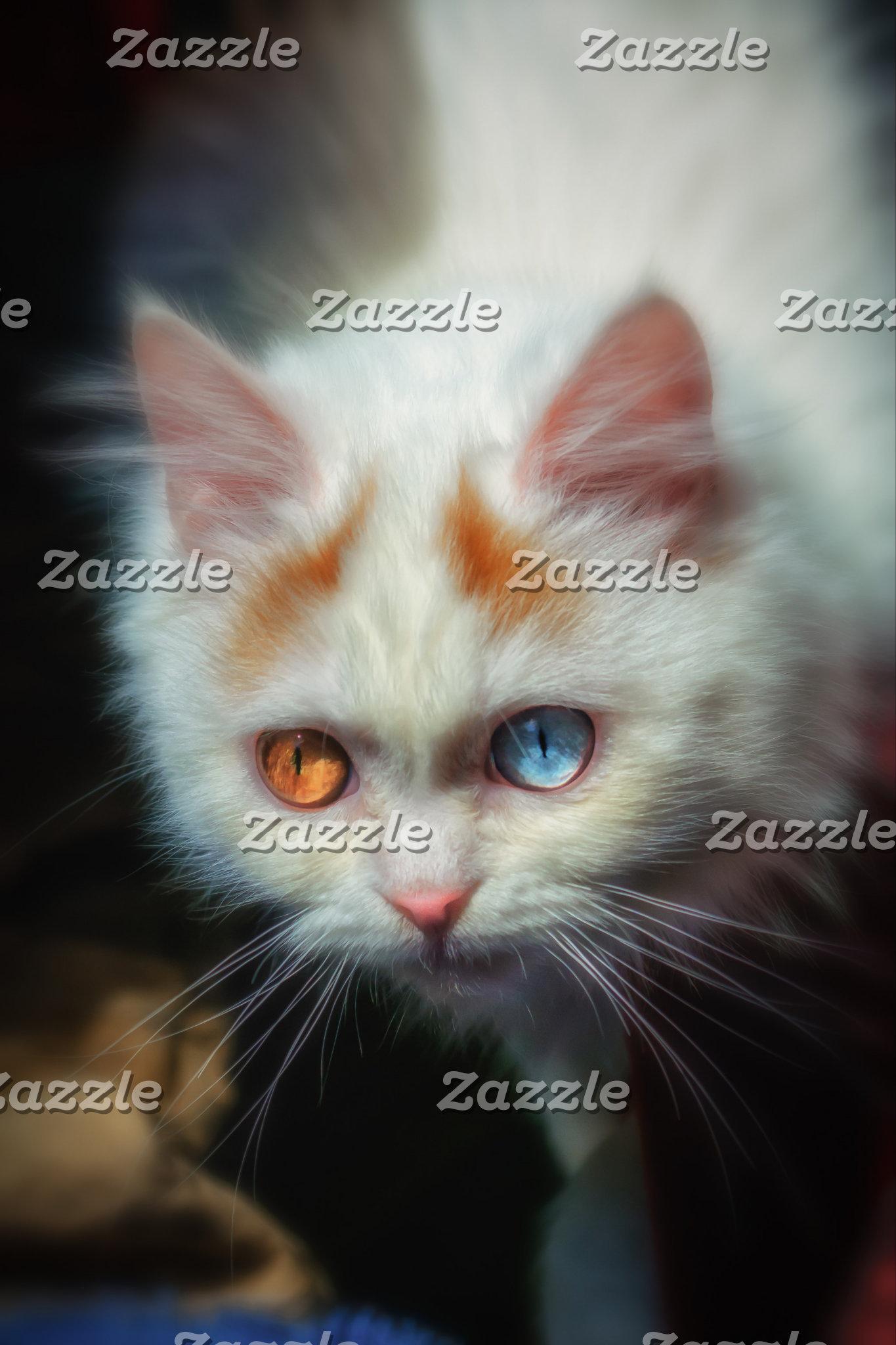 Odd-Eyed Persian Kitten