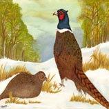 Pheasants in Snow Fineart