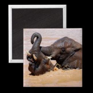 * Elephants