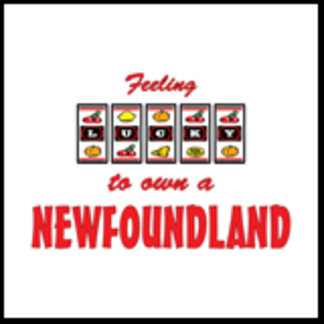 Feeling Lucky to Own a Newfoundland