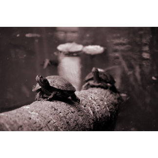 two turtles on palm trunk sepia