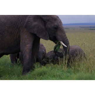Adults Elephants with their ypung