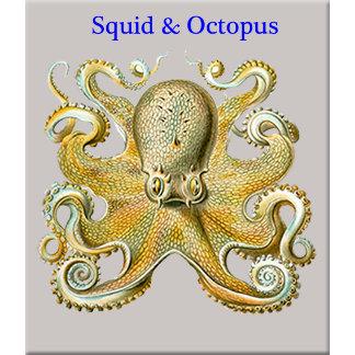 Squids & Octopods