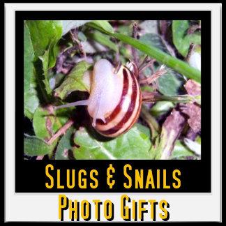 Slug And Snail Photo Gifts