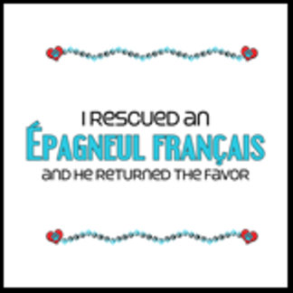 I Rescued an Épagneul Français (Male Dog)