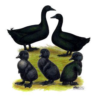 Cayuga Duck Family