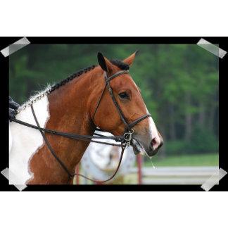 Paint Show Horse