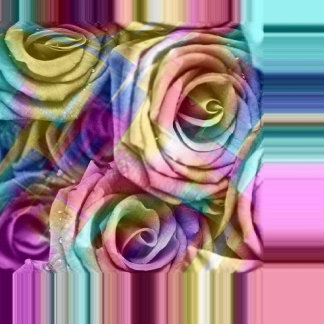 checkered roses