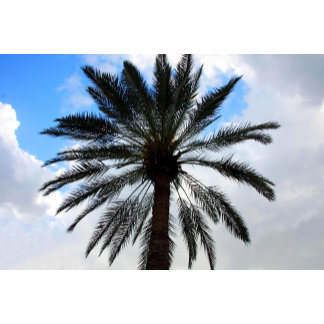 Palm Tree From Under 1