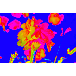 abstract flower magenta blue colorful floral image