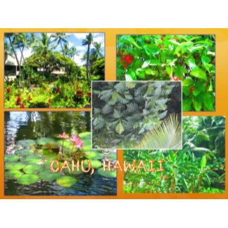 HAWAII COLLAGE #16