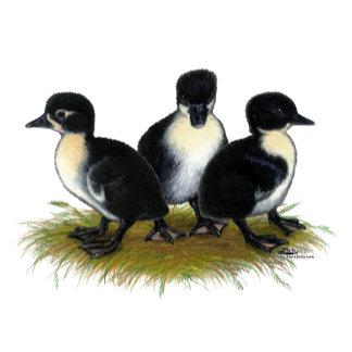 Black Swedish Ducklings