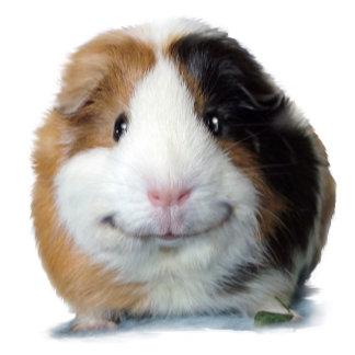 Smiling Guinea Pigs