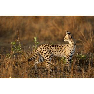 Upper Mara, Masai Mara Game Reserve, Kenya,