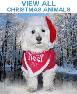 Christmas Animal Photo Image Gift Products