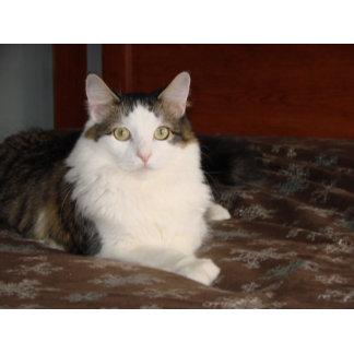Himalayan Cat Princess