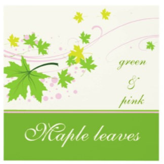 Maple leaves green pink