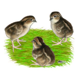 Bobwhite Quail Chicks