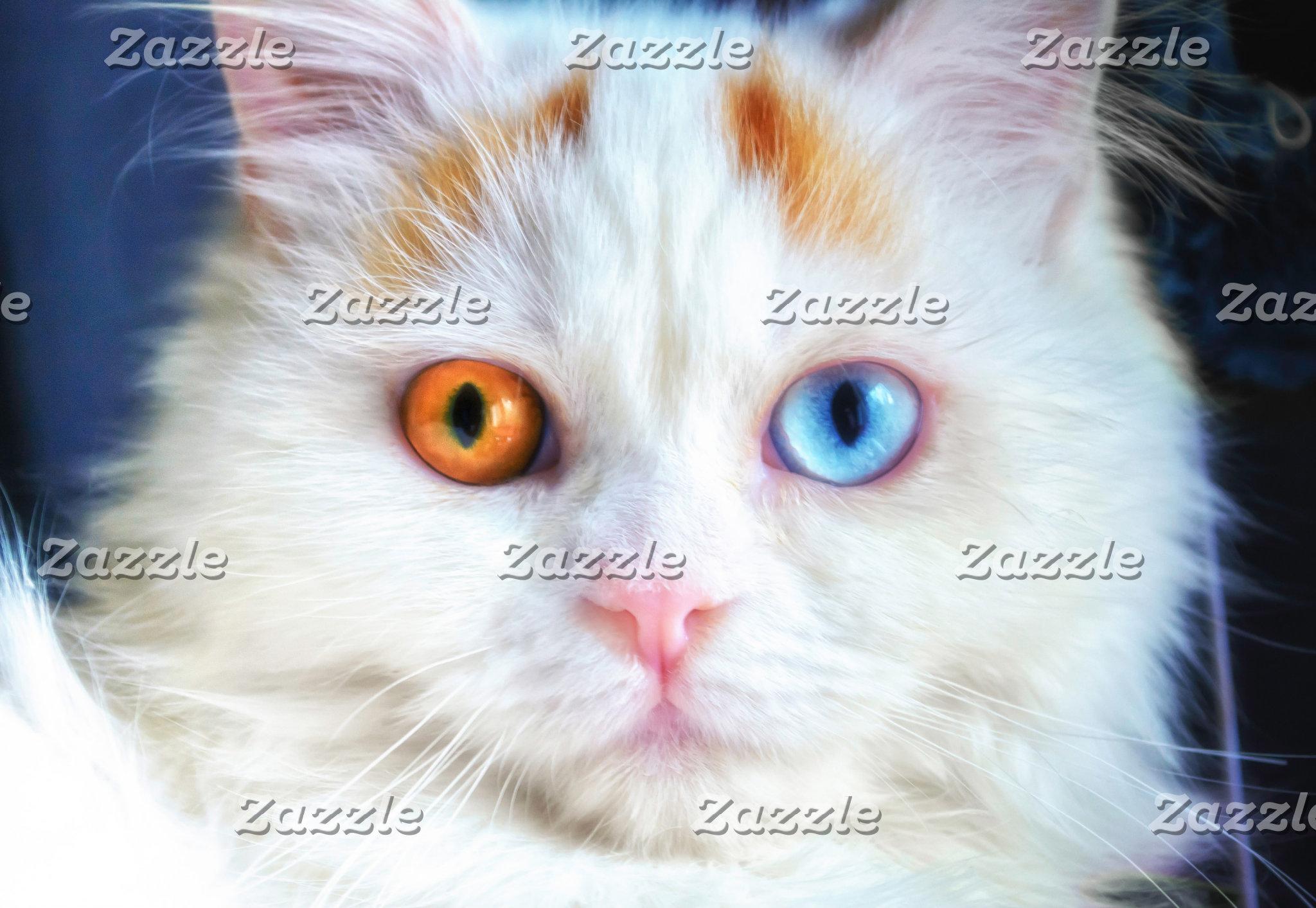 Odd-Eyed White Persian Cat