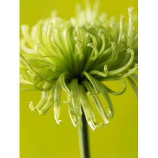 """Green Mum Flower Photo Poster Print"""