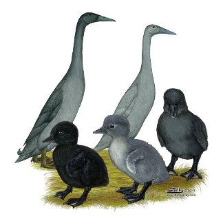 Blue Runner Duck Family
