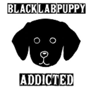 Black Labrador Puppy Addicted