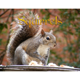 Squirrel 12 Month Calendar 2015