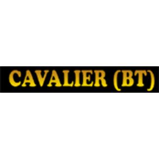 Cavalier King Charles Spaniel - Black & Tan