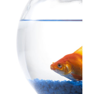 Goldfish in bowl on white background