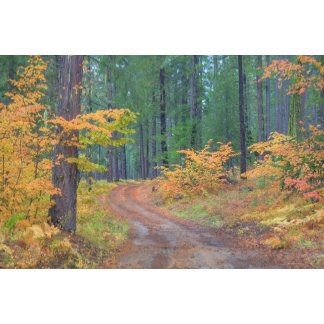 Autumn colors of forests in The Cascade 7