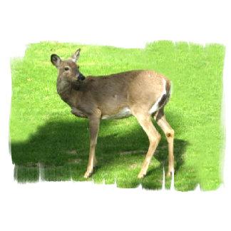 Deer on grass 108 items,