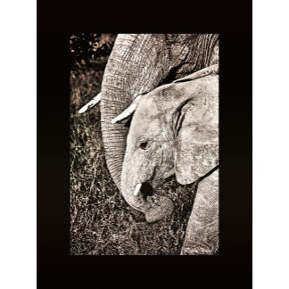 * Elephant