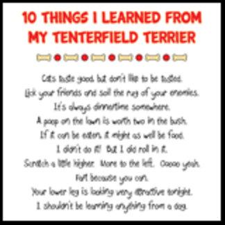 Things I Learned From My Tenterfield Terrier Joke