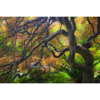 Autumn color Maple trees, Victoria, British 3