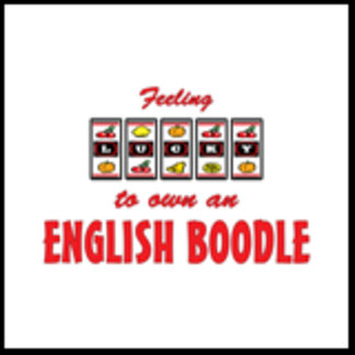 Feeling Lucky to Own an English Boodle