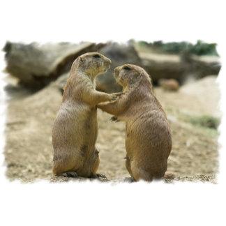 Prairie Dog Deal