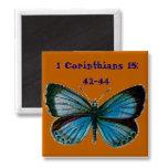 1_corinthians_magnet-p1470403578376221728gm5_325.j