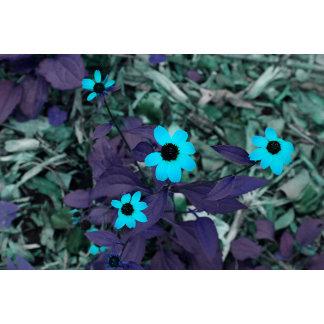 colorized blue flowers neat plant