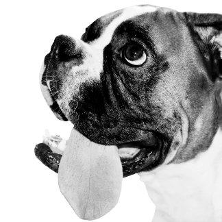 Funny Boxer dog big tongue