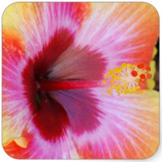 Florals/Trees