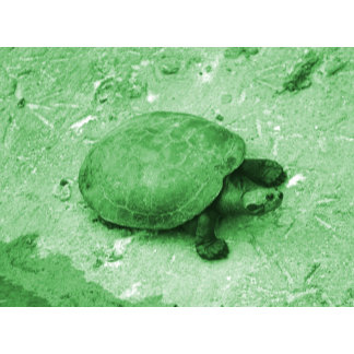 water turtle sunning green tint reptile