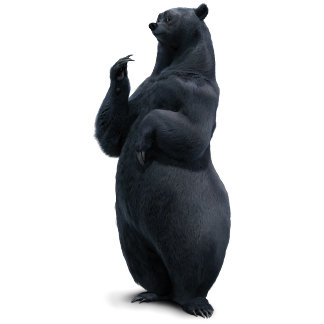 Brave Bear Standing up