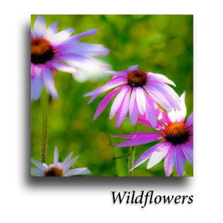 Flowers: Wild +