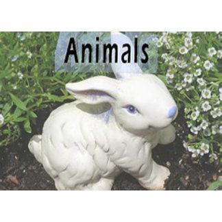 Animals/Pets Fashion