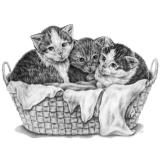 Cat Note Cards & Greeting Cards
